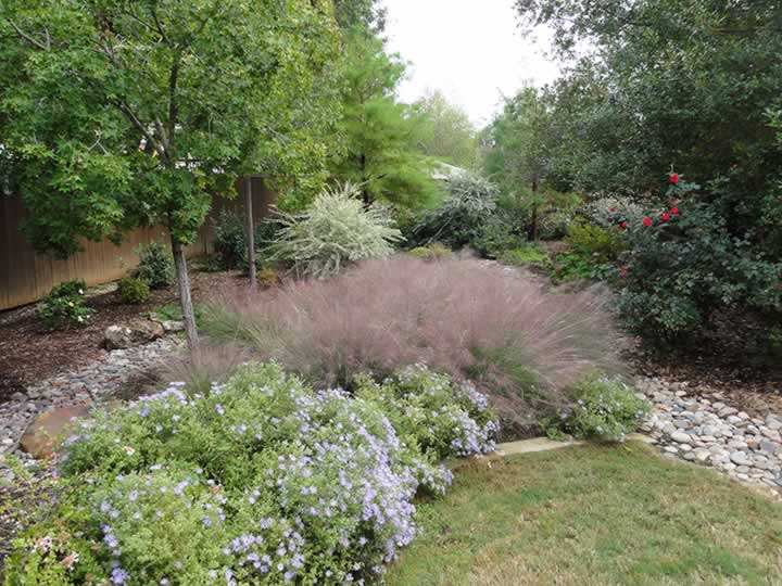 Native plants add a natural look and feel to landscaping