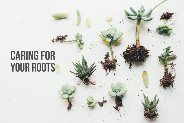 "Various plants showing their roots on a placard titled ""Caring for Your Roots"""