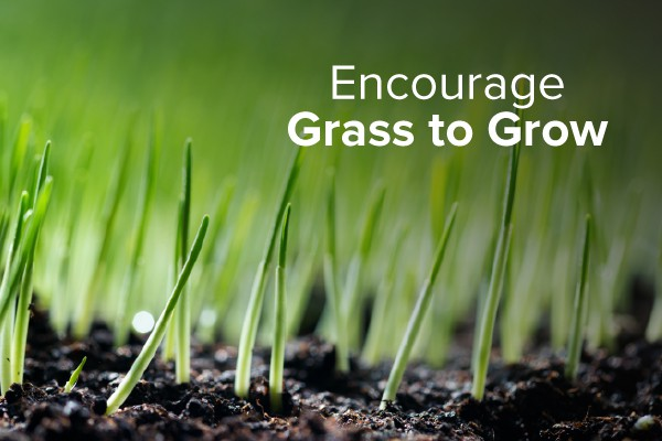 Green grass growing with the words, encourage grass to grow.